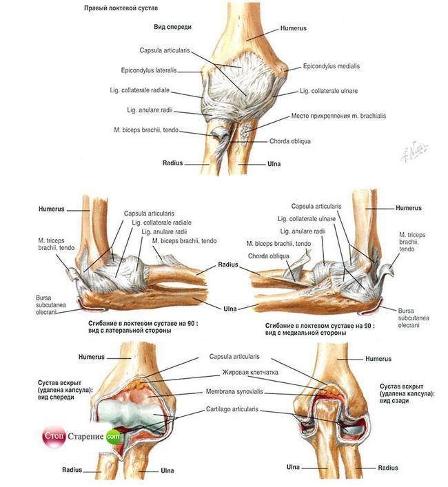 Болить ліктьовий суглоб? Давайте розберемося в проблемі