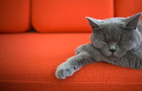 Як позбутися від запаху котячої сечі народними і професійними засобами