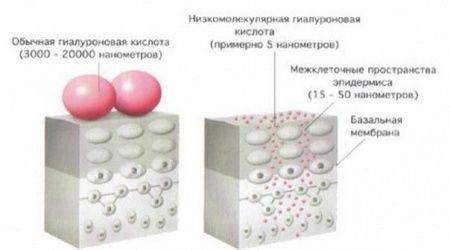 молекули гіалуронової кислоти