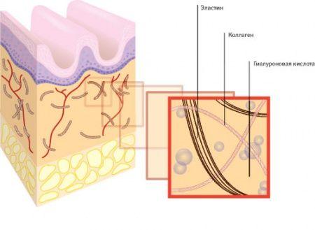 функції гіалуронової кислоти