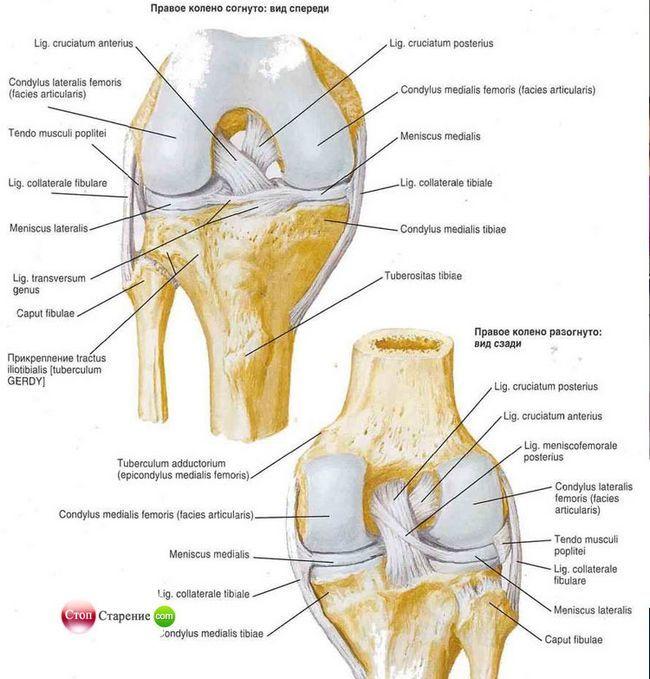 Колінний суглоб: хвороби і лікування