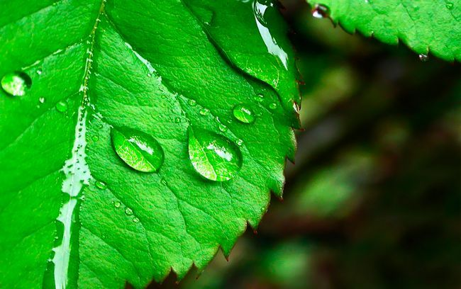 Косметика зі стовбуровими клітинами рослин