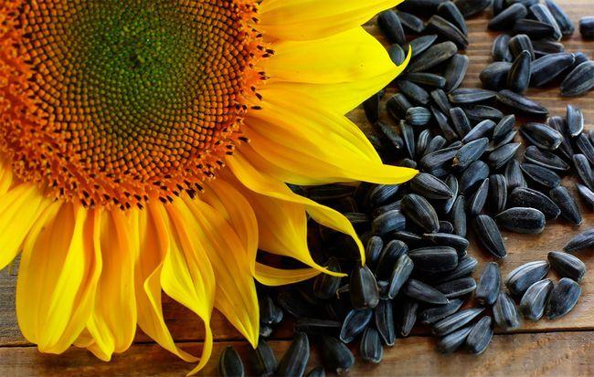 Чому насіння соняшнику так корисні?