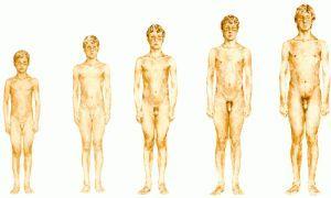 Статеве дозрівання хлопчиків: від хлопчика до чоловіка. Фізичні, гормональні та психологічні зміни