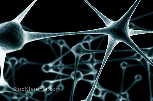 Проведено дослідження про вивчення генів подовжують життя і роблять нечутливими до болю
